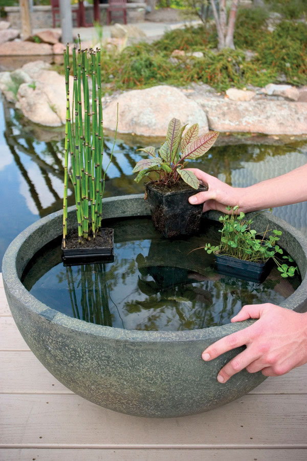 Sign up for our web specials - Aquatic Patio Ponds €� 24″ €� Aquascapes