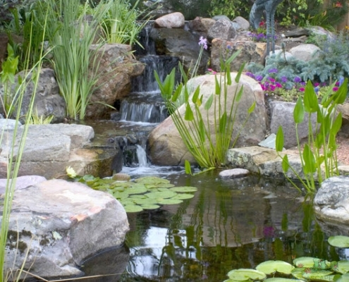 Pond Tips - Page 3 of 5 - Aquascapes