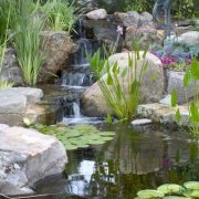 water garden beneficial bacteria