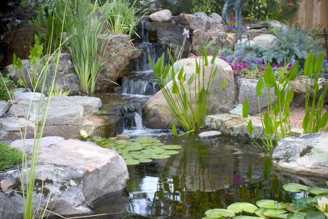 Small Backyard Ponds - Aquascapes