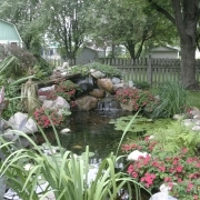 5 backyard pond trans 2