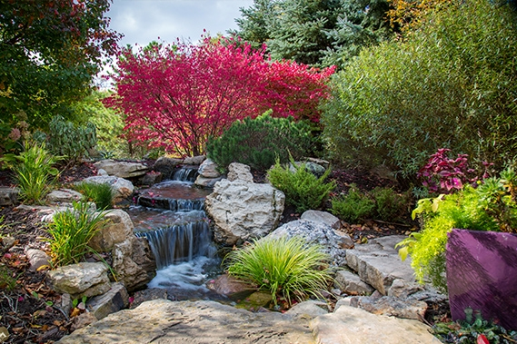 professional water garden design