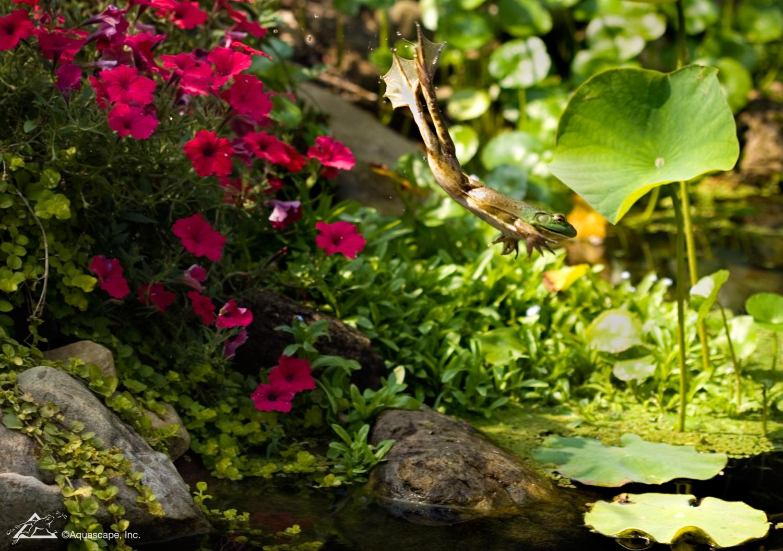 garden pond specialists