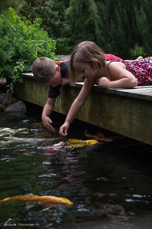 outdoor water garden pond