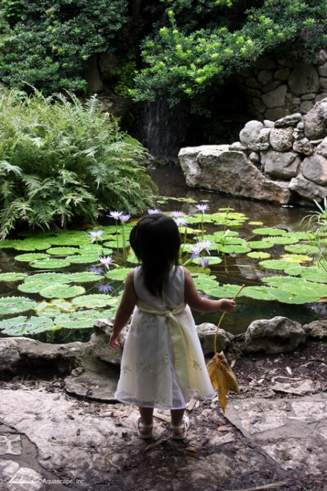 water lily pond feature