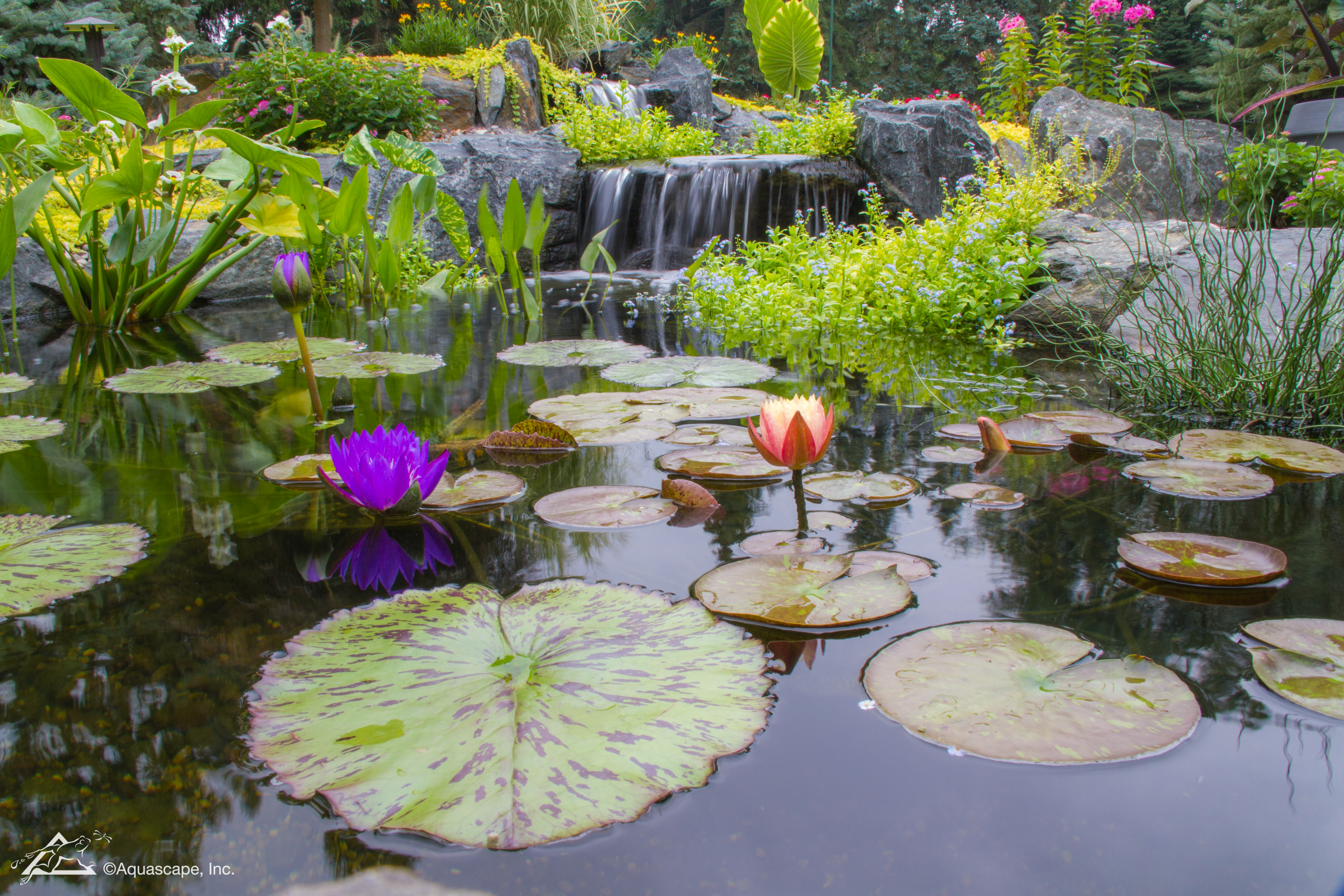 Top 10 Aquatic Plants For Water Features Ponds And Waterscapes