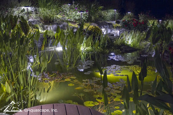Used In The Main Portion Of A Pond You Ll Enjoy Watching Fish Dart And Out Lights